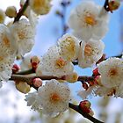 Plum Flowers by Vittorio Zumpano