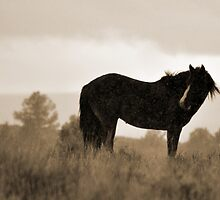 Steens Stallion in Snow, sepia by Tracey Westbury