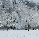 Snowy Trees by tcat757