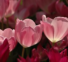 Lovely In Pink by Kathleen Struckle