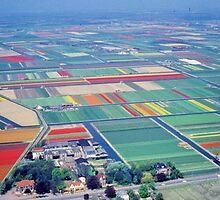 Flower  Carpet ,  Netherland by yoshiaki nagashima