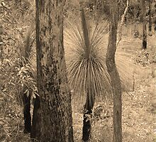 Grass Trees in sepia by Virginia McGowan