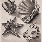 shells study by Emma Brooks-Mitrou