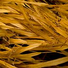 Ornamental Grasses and Dew Drops by Paul Marotta
