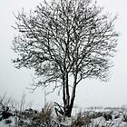 Winter tree by Ian Coyle