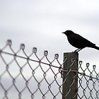 Crow on Fence by Alan Jones