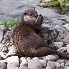 Otter relaxing by the waters edge by steve37