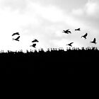 A gaggle of geese on the crest of a hill. by Paul Holland