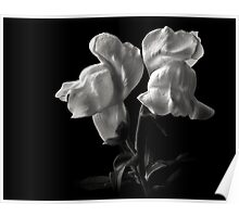 Snapdragons in Black and White Poster