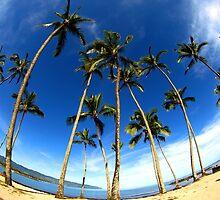 "Palm Trees and a Big Sky ""Tropical Palms"" by iseezu"