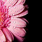Pink Flower by Eddie Howland