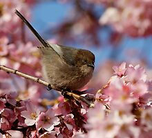 Poised Among Abundant Blossoms by Wolf Read