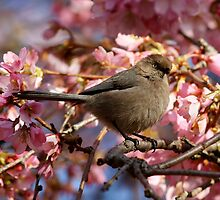 A Bushtit and Her Domain of Pink by Wolf Read