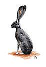 Jack Rabbit by secretplanet