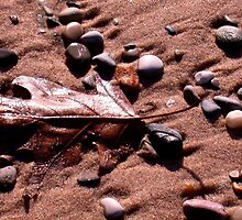 Fall leaf on the beach by Janean  Gieseler