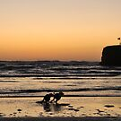Dogs at Sunset by Simon Marsden