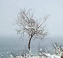 Standing Strong Along the Lake Michigan Coast by BarbL