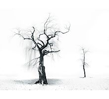 Old Tree, Young Tree Photographic Print