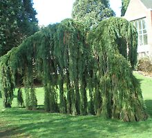 Tree / bonsai(?) by AuntieBarbie