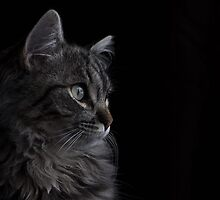 Lucky the Cat by punchdrunklove
