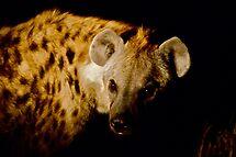 Hyaena by Chrissy Edye