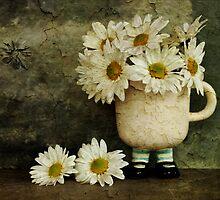 Daisies by Barbara Ingersoll