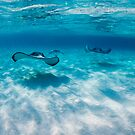Stingray City by muzy