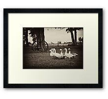 Chasing Geese - Argentina Framed Print