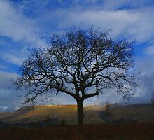 Moorland Oak - Muirhouse Muir, Scotland by Ian Mac