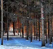 Through The Trees  by keleka656