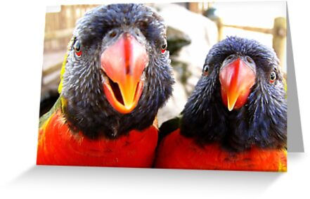 Rainbow Lorikeets ~ All beak & In your Face! by Kimberly Chadwick