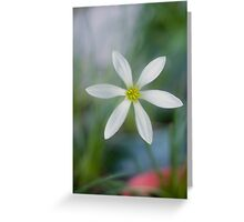 Rain Lilly - Jacques coffee plantation Mareeba  Greeting Card