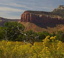 On the Road to Canyonlands by PatGoltz