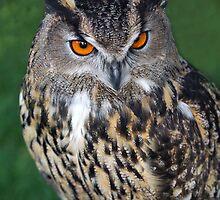 Eagle Owl !! by Maxsamsung