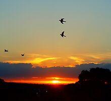 Rozella's At Sunset by StarKatz