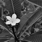Tropical Singularity by Jen Waltmon