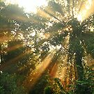 Morning Light In The Forest by Steven  Siow