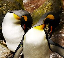 Posing Penguins by Ryan Davison Crisp