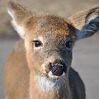 LIttle Deer! by JackieJlo2