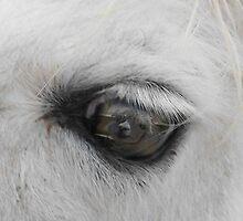 Eye only have eyes 4 U by Joni  Rae
