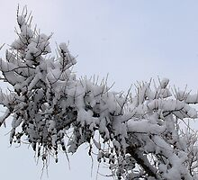 Snowy Branch by BarbL