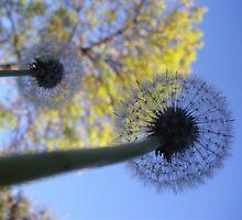 A breath by JewelsSmith