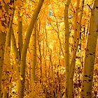 Silver Lake Aspens-1 by Zane Paxton