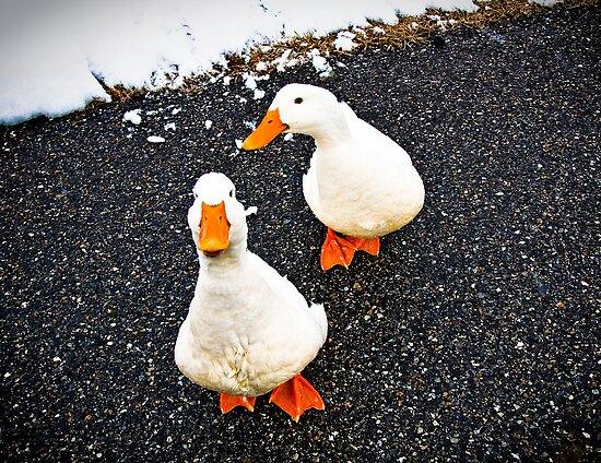 Renegade Ducks by martinilogic