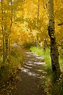 Silver Lake Aspens-3 by Zane Paxton