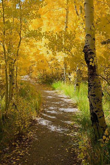 Silver Lake Aspens-3 by Zane Paxton