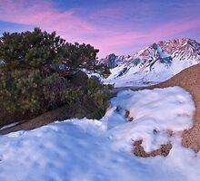 Buttermilk Sunrise by Nolan Nitschke