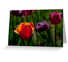 Colors of Tulips Greeting Card