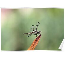 Dragonfly on Orange Flower Poster