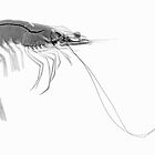 Prawn by Paul CESSFORD
